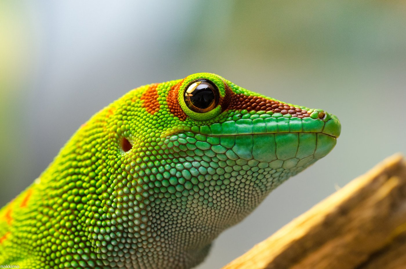 nice to meet you gecko cold blood warm heart